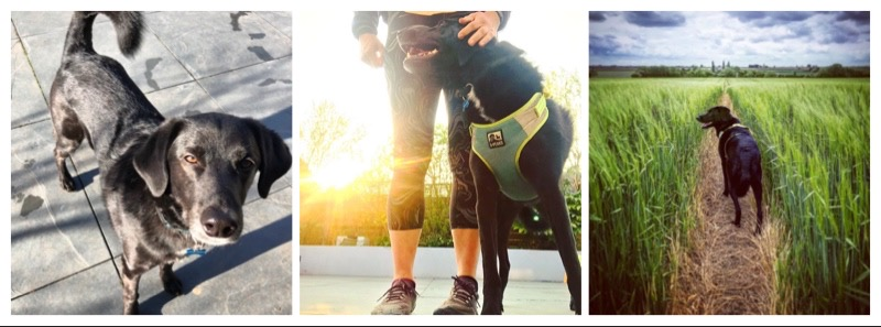 Running-tips-with-your-dog